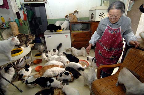 A refuge camp for cats at the home of retired doctor Hu Yuan… a guardian angel!